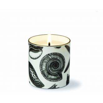The Seashore Scented Candle